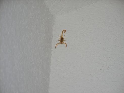 skorpionadmpedrolit.JPG