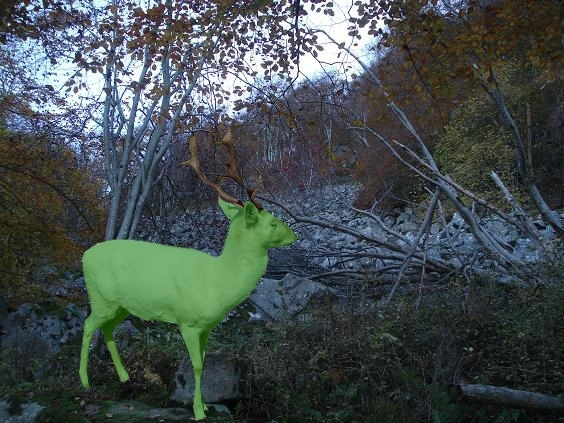 james-green-deer.JPG