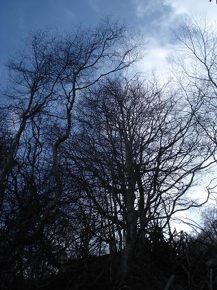 tree-mind.JPG
